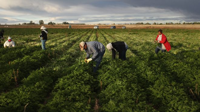 Migrants-ilegals-work